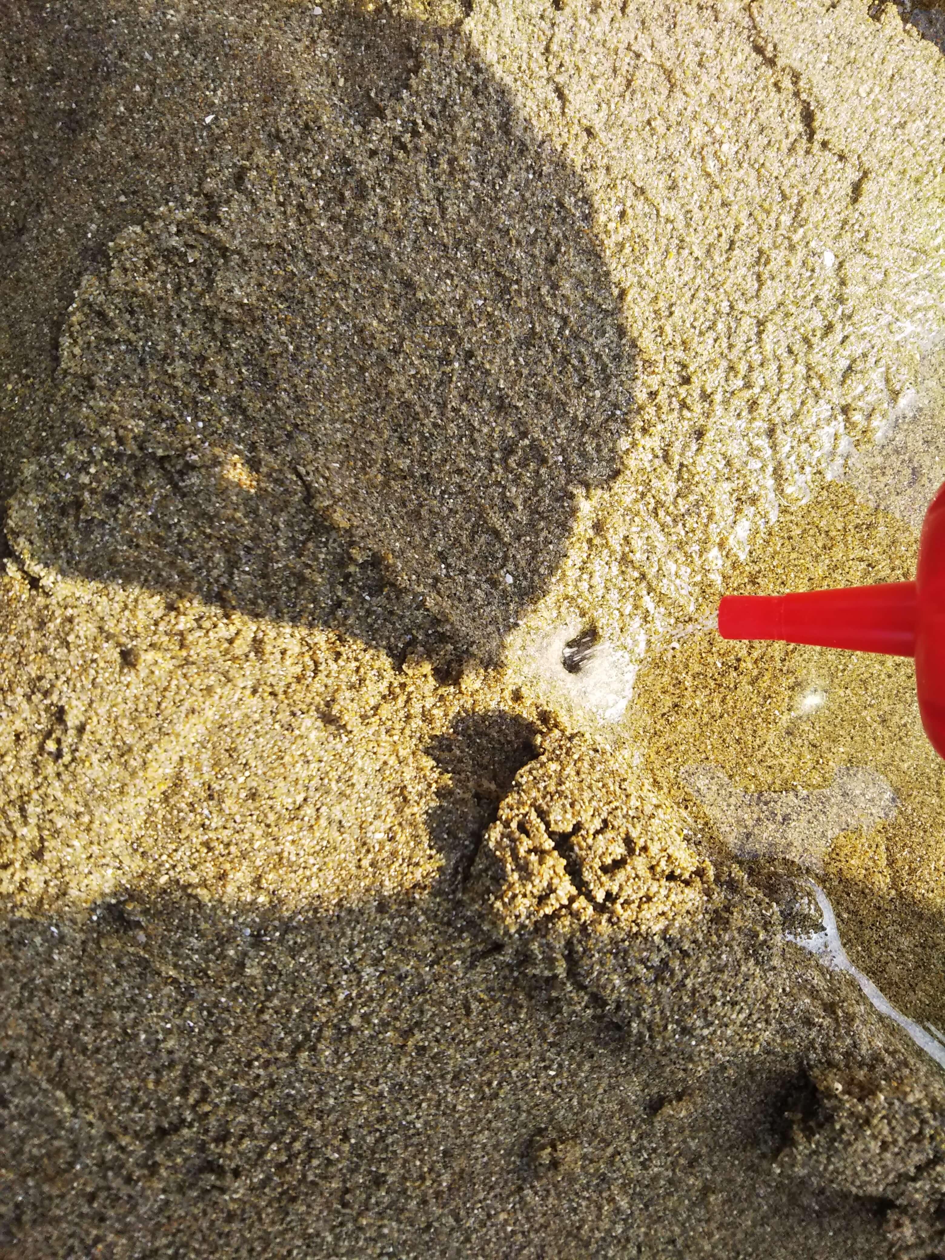マテ貝の穴に塩をかける