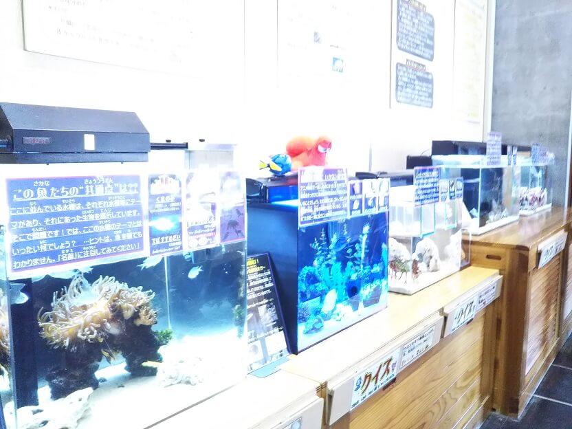 かにっこ館魚の水槽