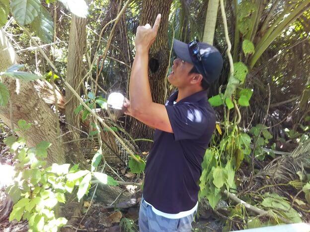 ココス島ミニジャングルツアー
