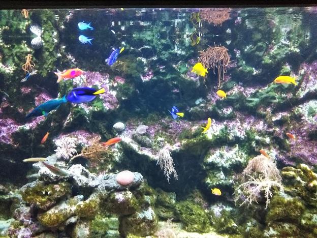 アンダーウォーターワールド グアムの魚