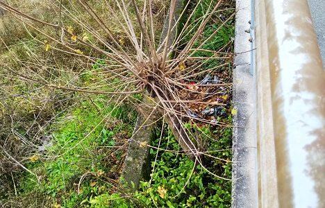 国道水路の大量の土砂や生えた木は国土交通省に無料で撤去